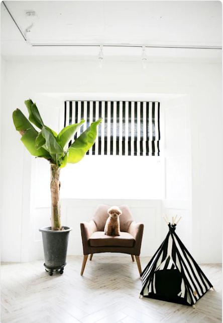 Phong cách hình học - Nhà cho thú cưng
