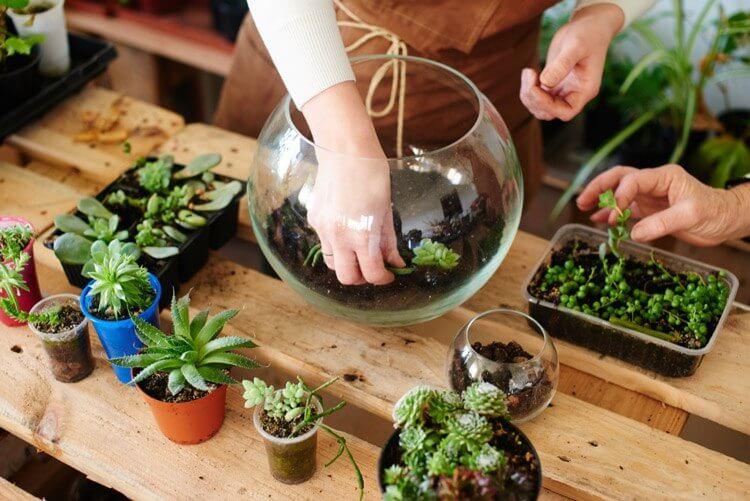 10 loại cây xanh nên trồng trong phòng tắm thêm phần sinh động - 8