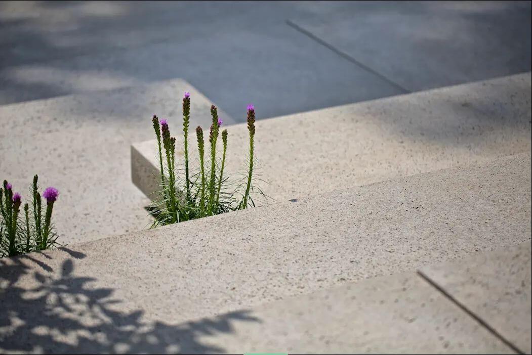 Thiết kế sân vườn ấn tượng - Nhà vườn 1000m2 - 2