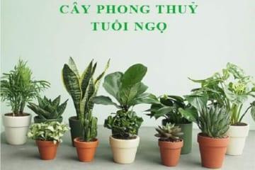 Hình ảnh: Cây phong thủy tuổi Ngọ